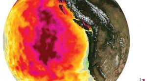 Así son las mortales olas de calor marinas
