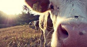 Argentina: ¡Por fin, la sequía mejora!
