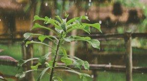 Llegan días de lluvia a CDMX: ¿Hasta cuándo?