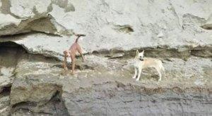 El emocionante rescate de dos perros en el gran socavón de México