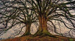 1 de cada 3 árboles en el mundo está en peligro de extinción